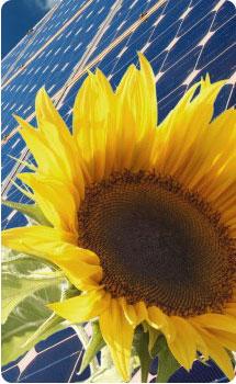 Zonnepanelen en het milieu